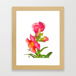 Pink Snapdragon Framed Art Print