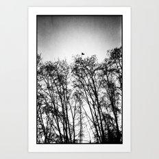 woods... Art Print