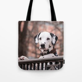 Dalmatian Dog Looking Out Over Gate Tote Bag