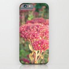 Morning Sunlight iPhone 6s Slim Case