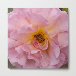 Pink Flower Macro Photo Metal Print