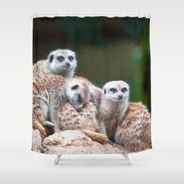 Meerkat Family  (digital painting) Shower Curtain