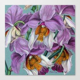 Vanda teres Canvas Print