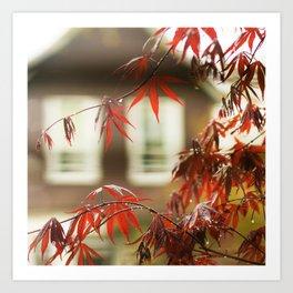 Urban Red Maple Art Print