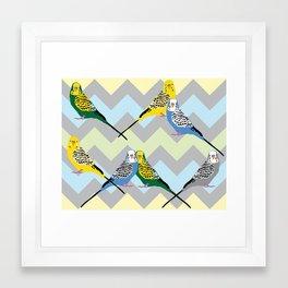 Parakeets Looking at You - Chevron Framed Art Print