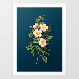 Vintage Flower Thornless Burnet Rose Botanical on Teal Art Print