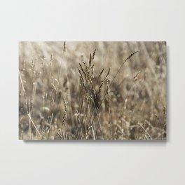 Wild meadow grass in winter Metal Print