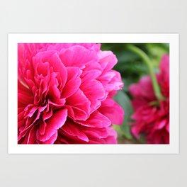 Royal Pink Art Print