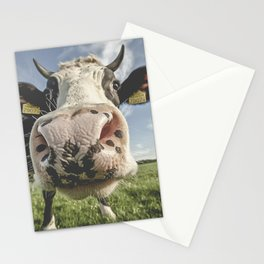 Inquisitive Cow Stationery Cards