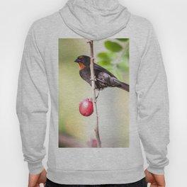 plum Eater Hoody