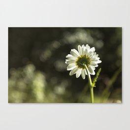 Daisy Light Canvas Print