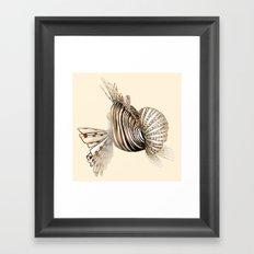 Poisson : Rascasse Framed Art Print