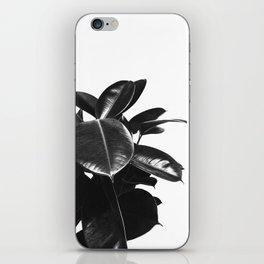 Black Ficus Elastica iPhone Skin