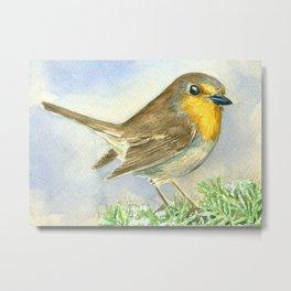 Robin bird on a frosted juniper branch Metal Print