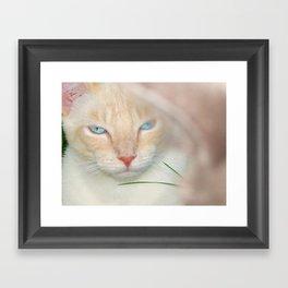 Prince Willy Framed Art Print