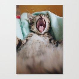 Kitten Yawning Like A Lion Canvas Print