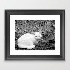 White cat Framed Art Print