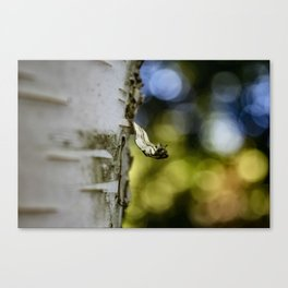 A Walk in the Woods is Good for the Soul Canvas Print