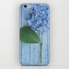 Powder Blue Hydrangea iPhone & iPod Skin