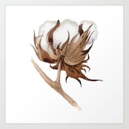 Cotton Flower 03 Art Print