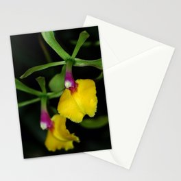 Epidendrum Orchid Stationery Cards
