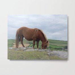 Pony on a Hill Metal Print