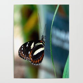Doris Longwing Butterfly-2 Poster