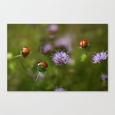 Ladybirds.... Canvas Print