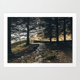 Stone path in woodland at Blea Tarn. Cumbria, UK. Art Print