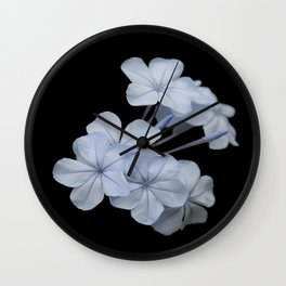 Pale Blue Plumbago Isolated on Black Background Wall Clock