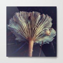 Mystery Mushroom Original Metal Print