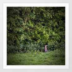 Watership down Art Print
