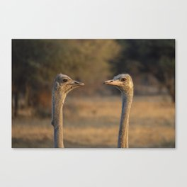 Two Heads Canvas Print