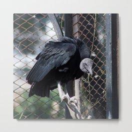 Vulture Culture Metal Print