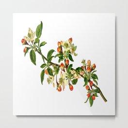 Apple branch deciduous fruit Metal Print