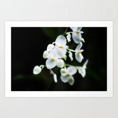 Wittle Orchids!  Art Print