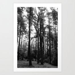 Trees 4 Art Print
