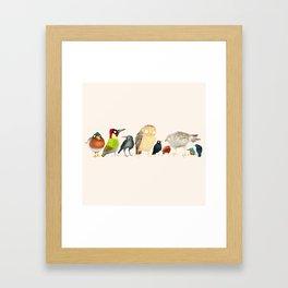 Woodland Bird Collection Framed Art Print