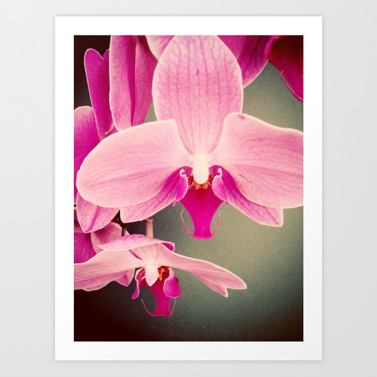 Orchid Love Art Print