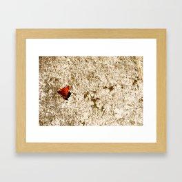 italien butterfly Framed Art Print