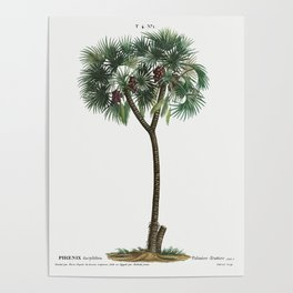 Vintage Palm Tree Poster Poster