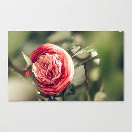 Camellia 3 Canvas Print