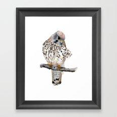 Kestrel Framed Art Print