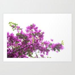 Pink Bougainville Backlight Art Print