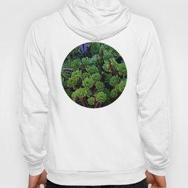 Succulent valley Hoody