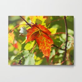 Red Fall Metal Print
