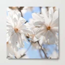 3 glowing Magnolias Metal Print