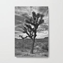 Joshua Tree Bloom 1 Metal Print