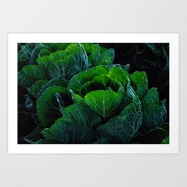 Cabbage Patch Darlings Art Print