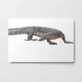 isolated varanus on on white background Metal Print